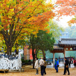 how to go nami island