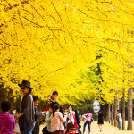 14 Things to Do in Nami Island, South Korea