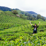 BOH Tea Centre Sungai Palas, Cameron Highlands